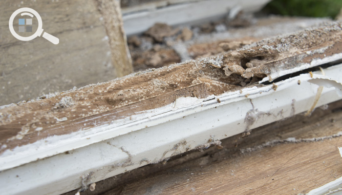 Detecting Early Wood Decay